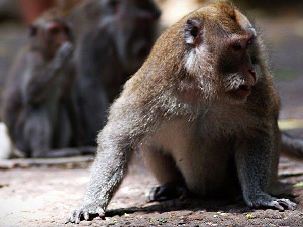 Camp Leakey and Tanjung Puting NP tour, 3 days
