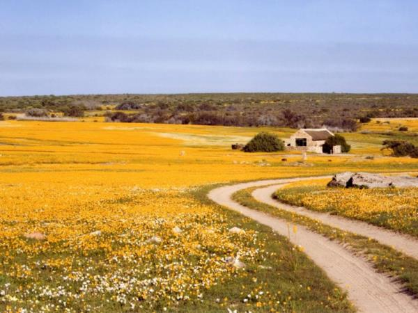 Spring wild flower holiday in Namaqualand, South Africa