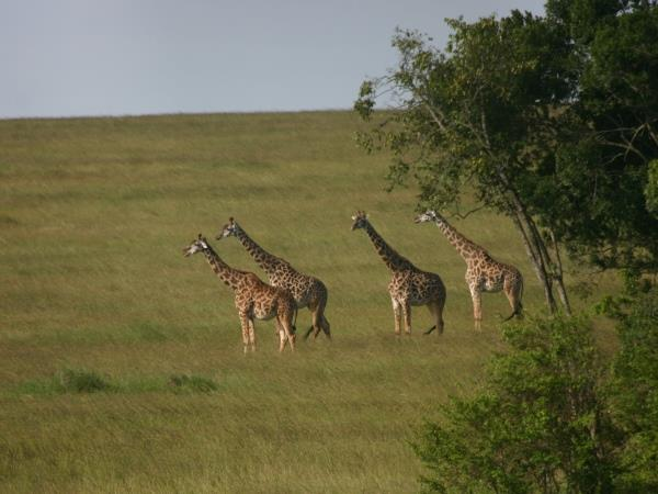 Kenya 9 day Safari, tailor made