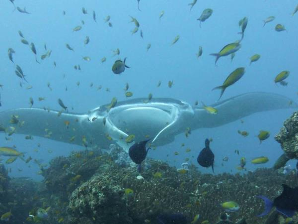 Mozambique scuba diving holiday
