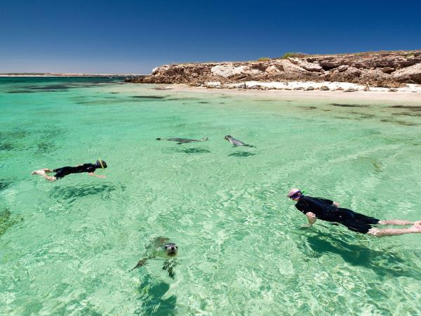 South Australia wildlife tour, 3 day
