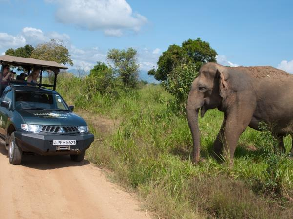 Sri Lanka luxury camping & wildlife holiday