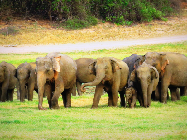 Sri Lanka wildlife holiday, tailor made