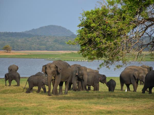 Sri Lanka tour, off the beaten track