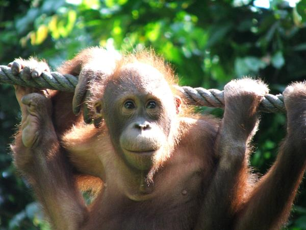 Malaysia and Borneo 15 day tour