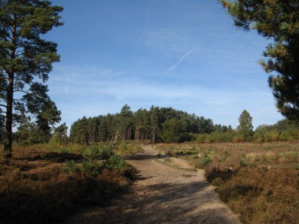 Surrey hills self guided walking holiday, England