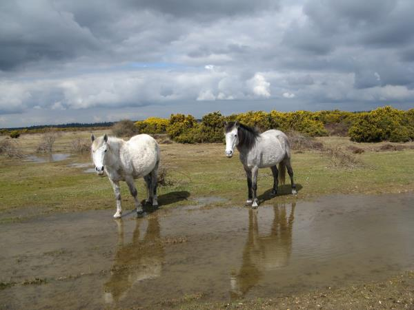 New Forest and Isle of Wight walking short break