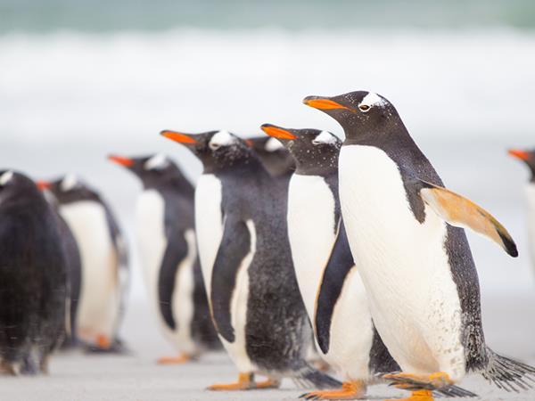 South Georgia, Falklands and Antarctica cruise