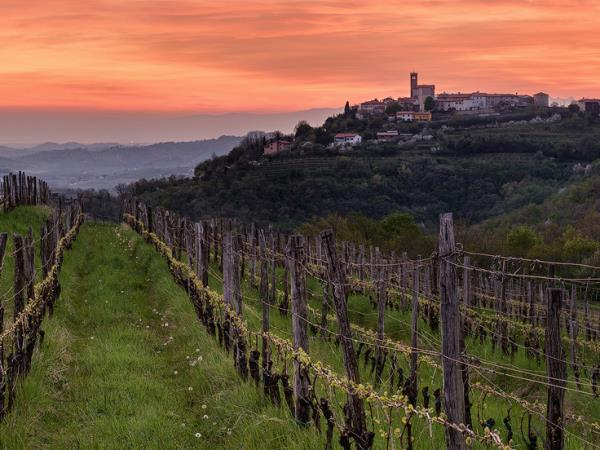 Slovenia food and wine tour