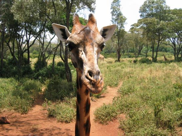 East Africa family adventure holiday