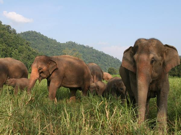 Thailand wildlife holiday, elephants & waterfalls