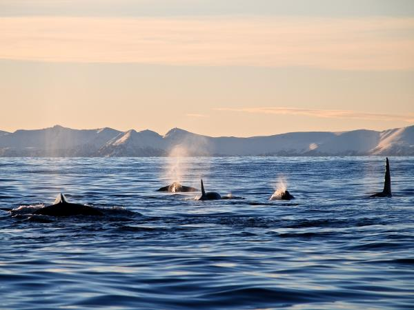 Norway Northern Lights Holiday Senja Island Helping