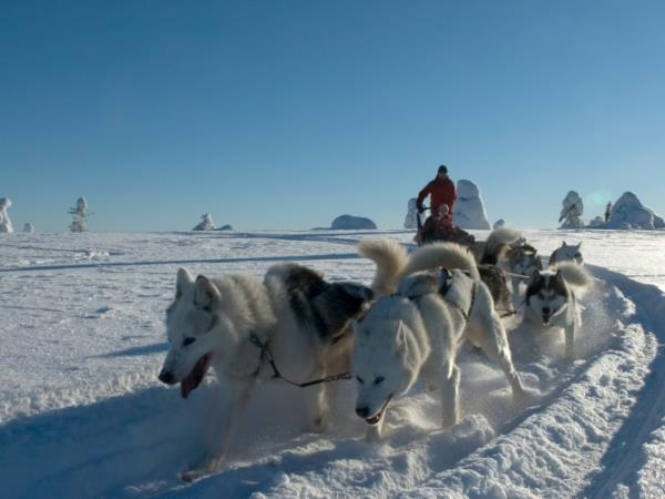 Finnish Lapland activity holiday with log cabin