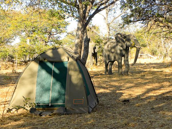 Botswana National Parks safari holiday