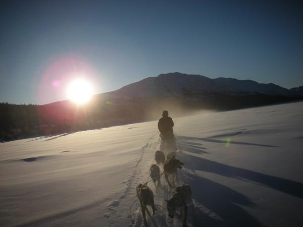 Yukon dog sledding holiday, Canada