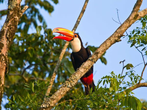 Brazil wildlife holiday, Amazon and Pantanal
