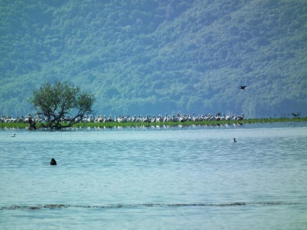 Greece bird watching holiday, Lake Kerkini