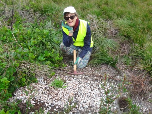 New Zealand conservation volunteering