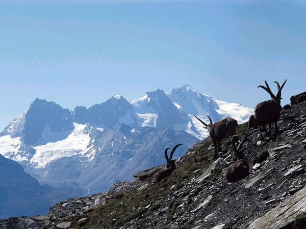Gran Paradiso walking holiday in the Italian Alps