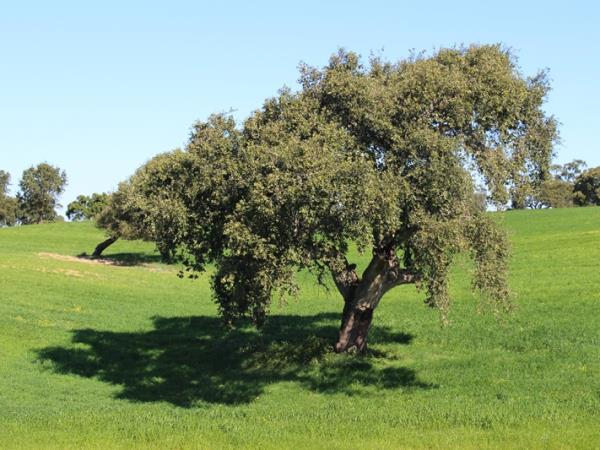 Alentejo self guided walking in Portugal