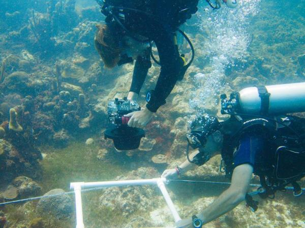 Divemaster and instructor courses in the Caribbean