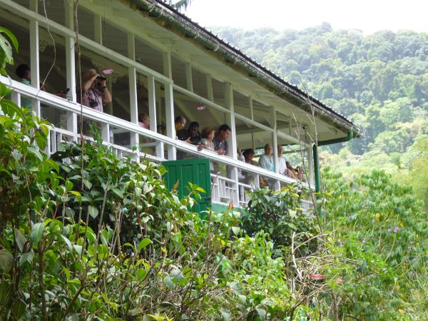 Trinidad & Tobago birdwatching small group tour