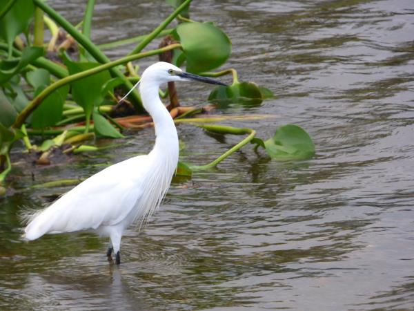 Culture and birding holiday in Uganda
