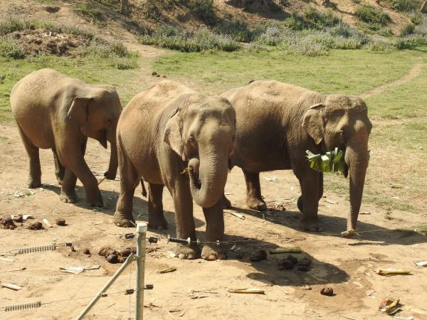 Elephant holiday in Nepal