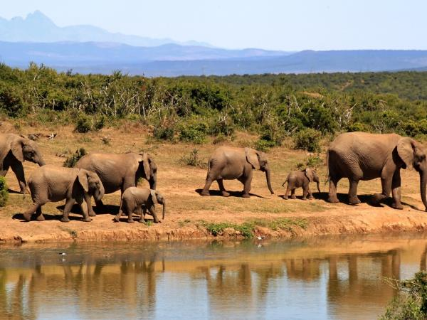 South Africa family adventure holiday, tailor made