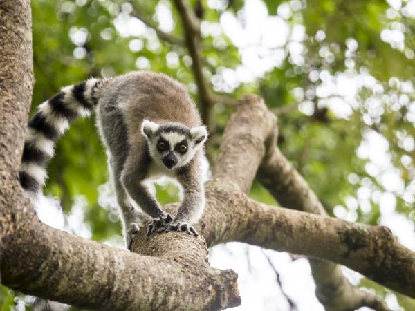 Madagascar wildlife tour with hiking