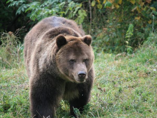 Romania wildlife holiday, bear tracking and birdwatching