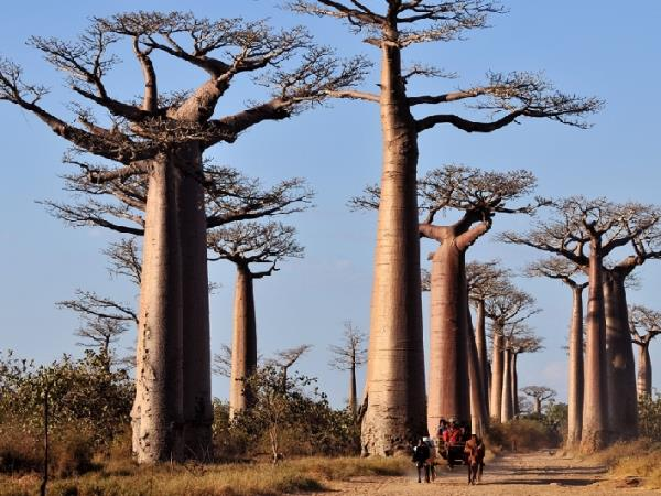 Madagascar tour, grand discovery