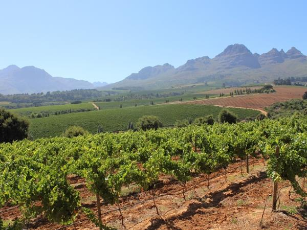 South Africa food and wine tour