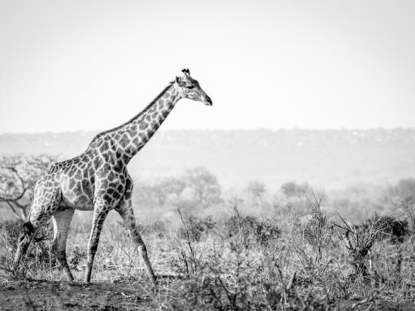Wildlife photography & conservation volunteering in south Africa