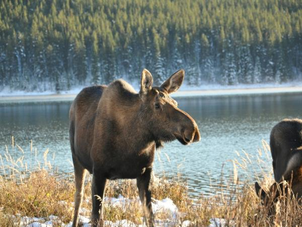 Canada holiday, national parks and wildlife