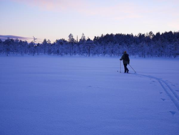New year northern lights & wildlife holiday, Swedish Lapland
