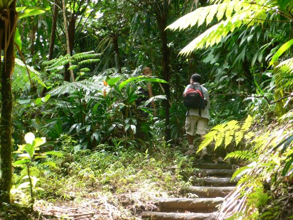 Walking holidays in Dominica, 11 days