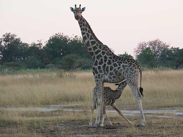 Botswana safari holiday