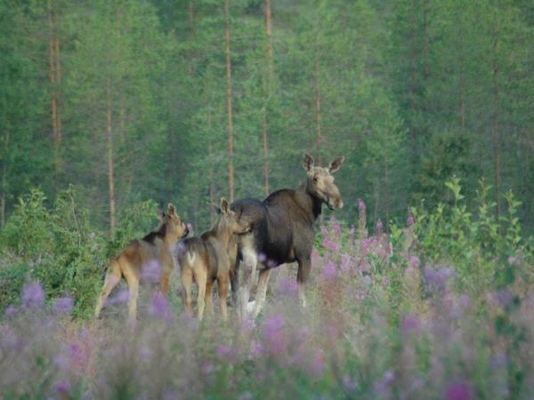 Wild Taiga wildlife holiday in Finland