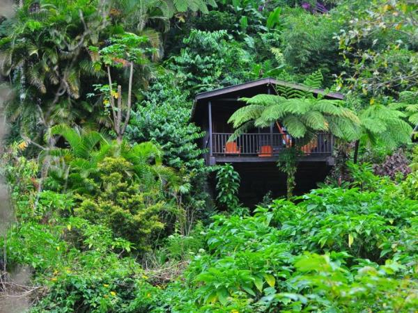 Dominica forest cabin holiday accommodation