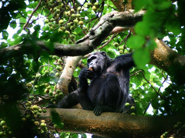 Uganda highlights tour