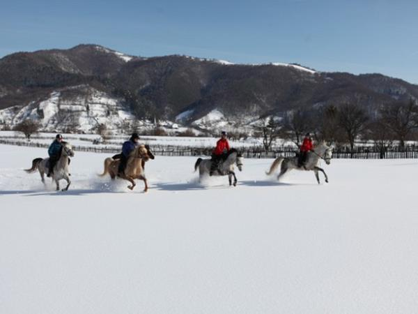 Horse riding holiday in Romania