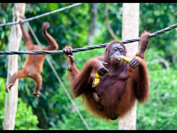 Borneo nature tour, Brunei and Sabah