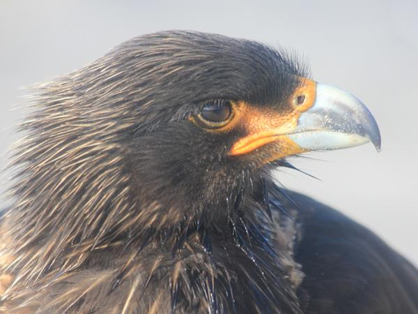Falkland Islands tour, birds and wildlife