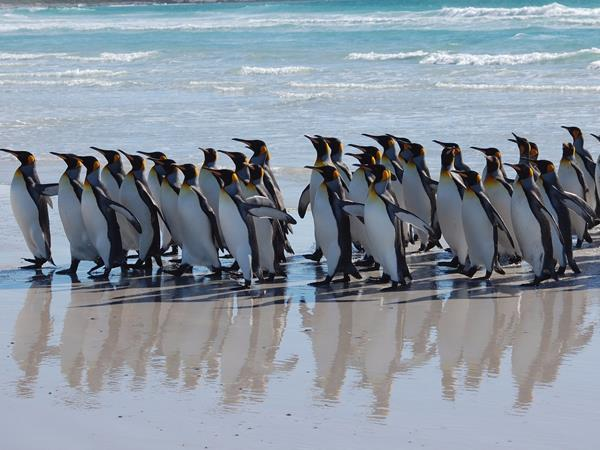 Falkland Islands wildlife tour