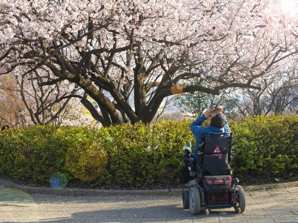 Wheelchair accessible holiday to Japan