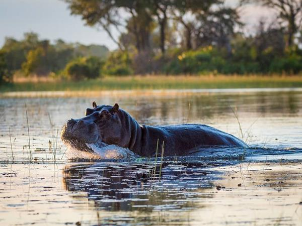 Best of Botswana and Zimbabwe