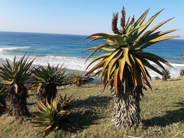 South Africa hiking holiday on the Sunshine Coast