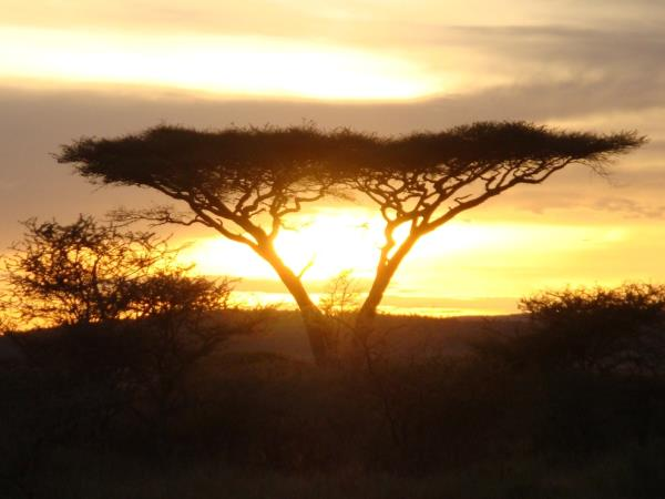 Classic Tanzania safari and beach holiday