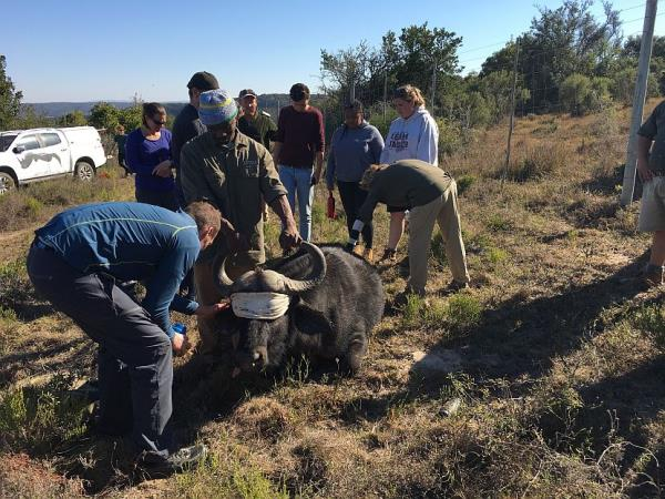 South Africa volunteering with the big five